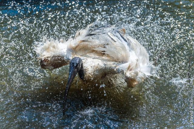 A bird's bath